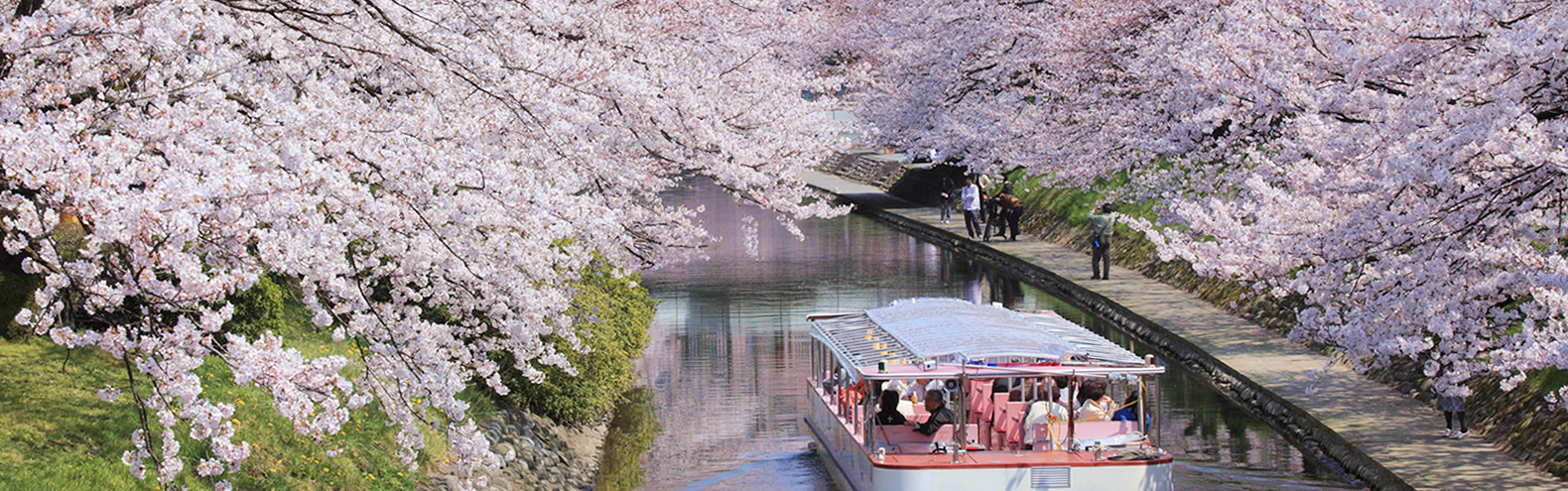 Hot spot for cherry blossoms - River side of Matsukawa River, centre of Toyama city