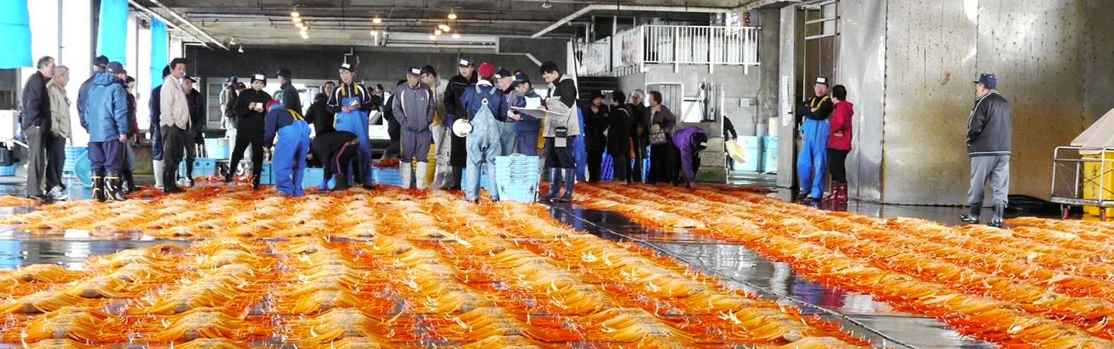 Midday auctions at Shinminato fishermen's wharf/Fresh crab